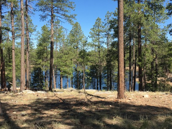 Willow Springs Lake and forest