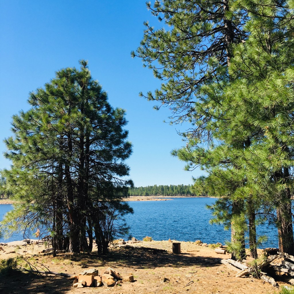 View of Willow Springs Lake from treelined shore