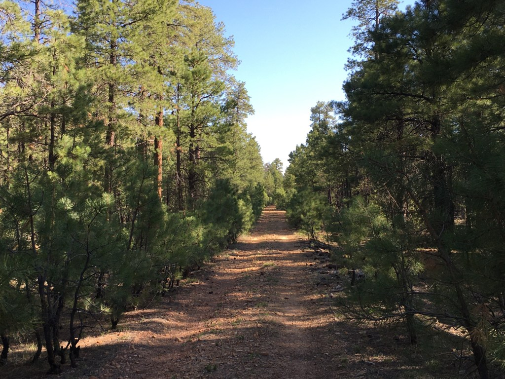 dirt hiking trail with trees on both sides