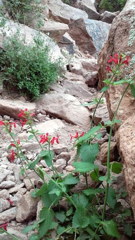 Superstition-flowers-3