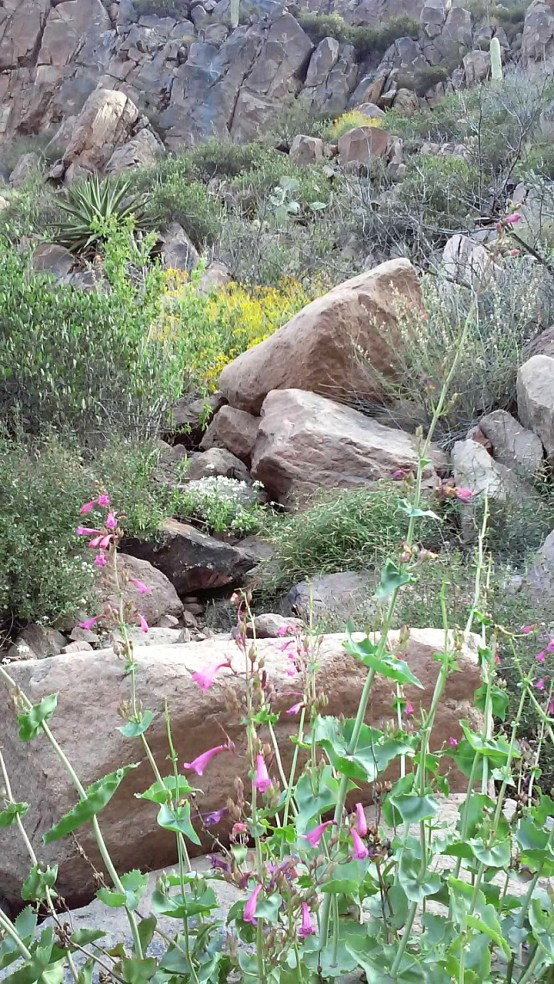Superstition-flowers-5