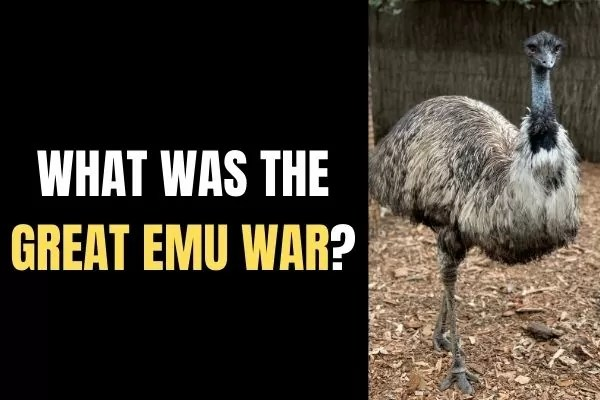 What was The Great Emu War