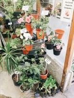 Flores variadas en el hall del vivero. Foto