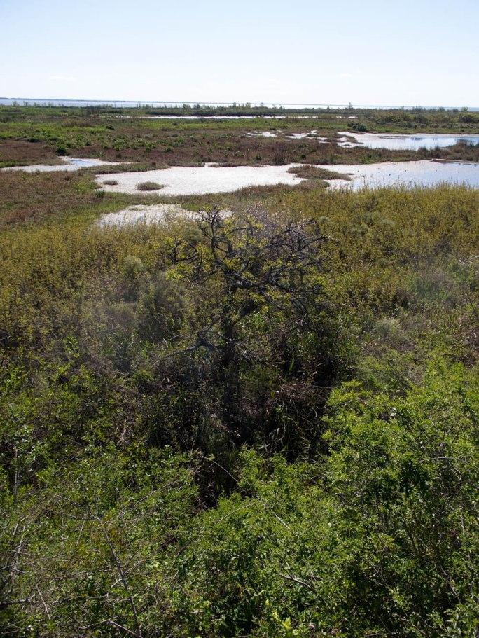 Vista de la reserva protegida de Martín García. Foto