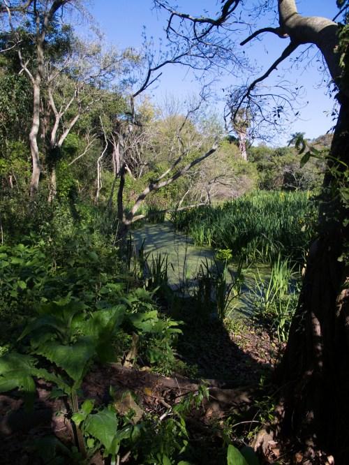 Laguna cerca del muelle en la Isla Martín García. Foto