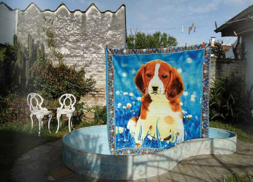 Tapiz de perro, foto de Darío Falcón para Guau!