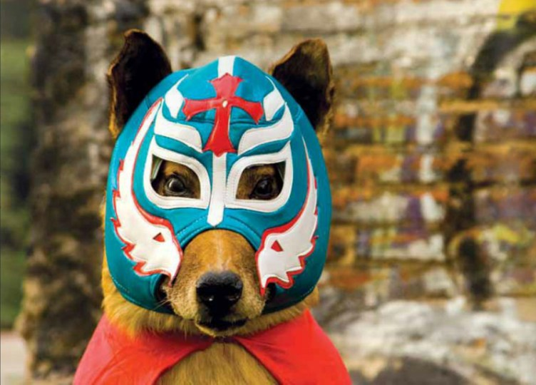 guau-libro-perros-55