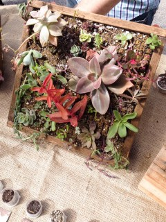 Jardines verticales de suculentas en soportes de madera. Foto