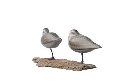 2 sandpipers