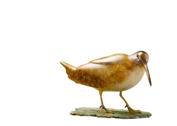 Eureasian woodcock