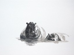 Nilpferde 1