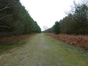 rendlesham-forest08
