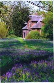 """Queen Charlotte'sCottage with bluebells from """"Letters of a Travelling Lady"""" Taken by Reginald J. Dunkley"""