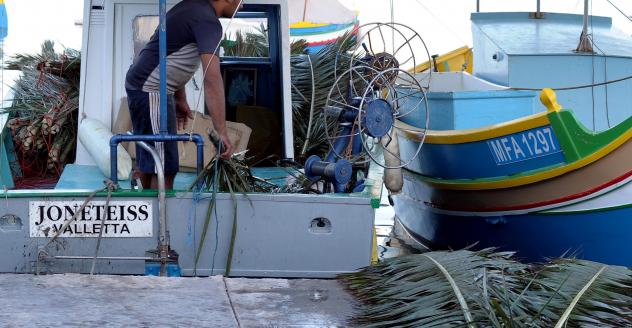 04 stocking up with palm fronds