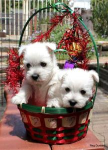 Eunice's puppies 6 (Small)