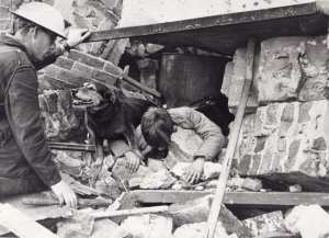 Civil Defence rescue dog during the Blitz