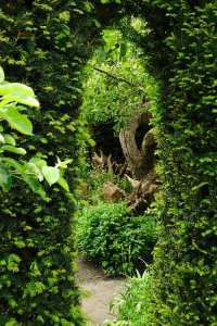 Peeping from one garden to another