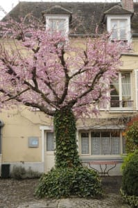 blossoming-tree-in-the-courtyard-of-Auberge-Ravoux