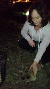 Kathy with the injured Fox at Sandy Lane