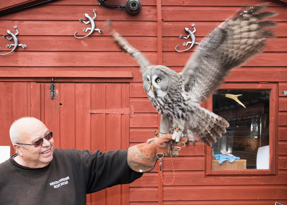 Warwickshire Wildlife Sanctuary, Geoff Grewcock and a Great Grey Owl.