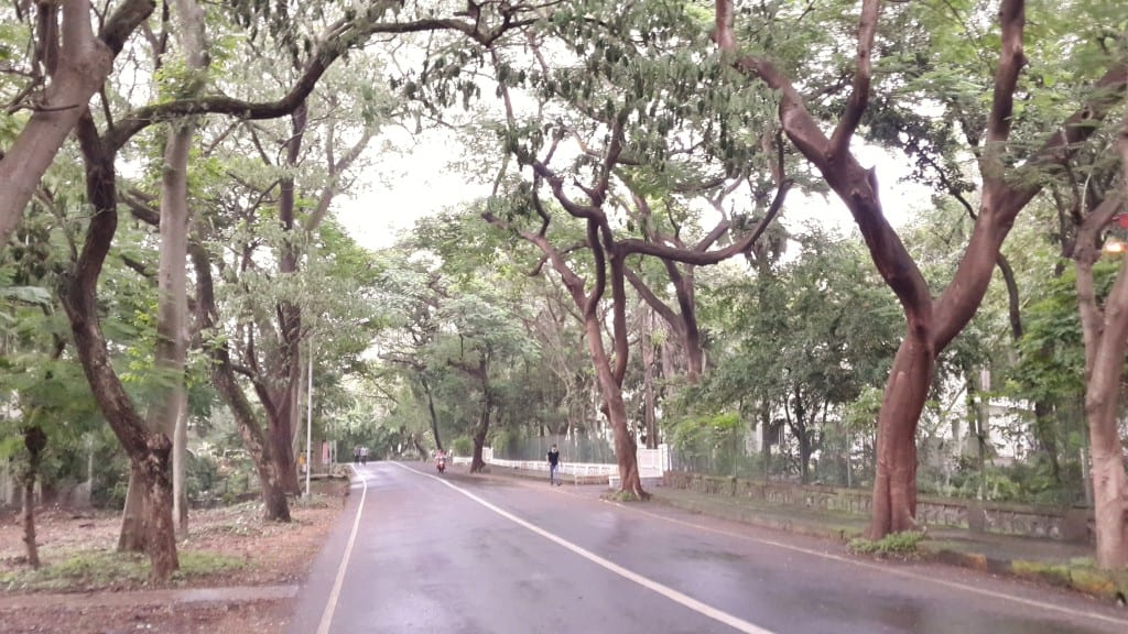 Indian Institute of Technology (IITB) campus road