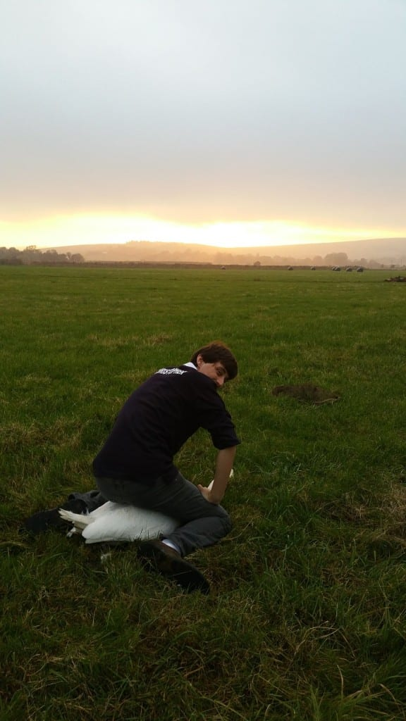 Plumpton Student Chris securing his first swan Rodmell