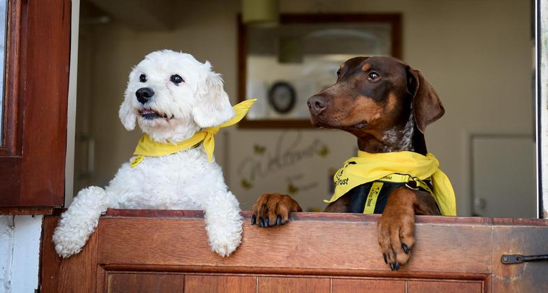 Arnie-and-Brogen Courtesy of Dogs Trust
