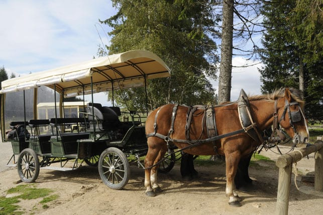 Horse-drawn cart in bison sanctuary
