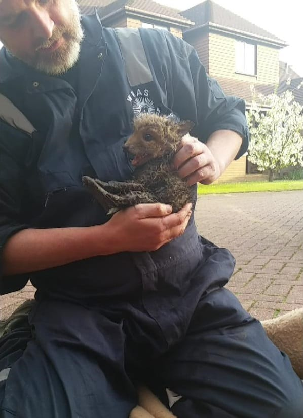 Cooden Beach Fox Cub Rescue 10th May 2016 (4)