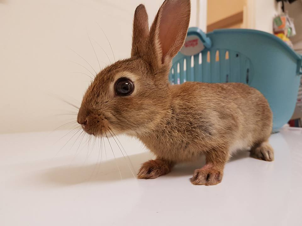Road Casualty Rabbit from Polegate