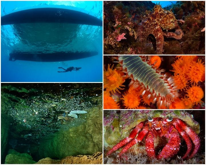 -the-oceana-survey-results-world-record-depth-for-red-coral-established-by-malta