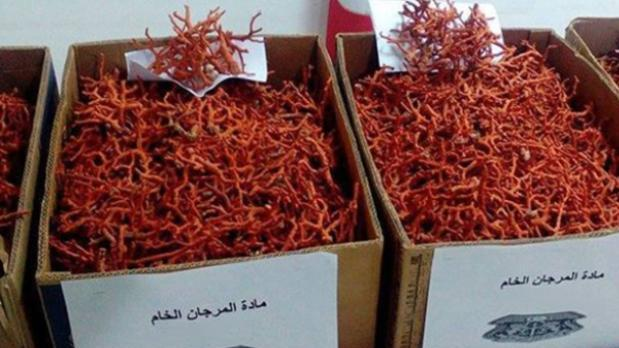 red-coral-smuggled-from-tunisia