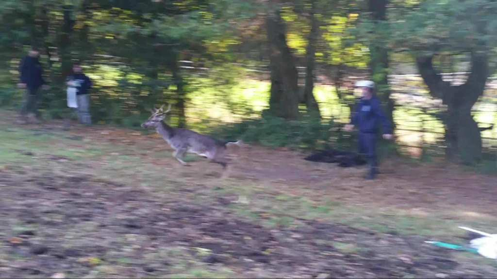 Duddleswell-Deer-Rescue