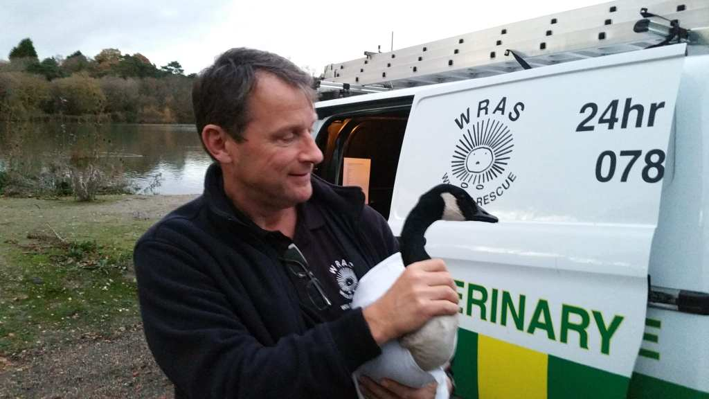WRAS-Rescuer-Iain-with-the-rescue-Canada-Goose-at-Piltdown-Pond
