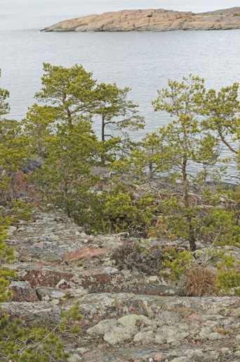Nature is everywhere in Aland archipelago