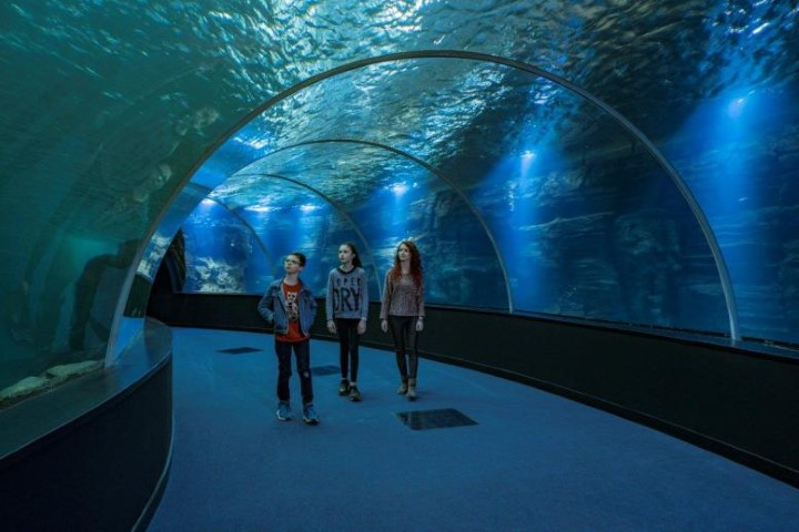 Pic A walk through a tunnel at the amazing sea life centre