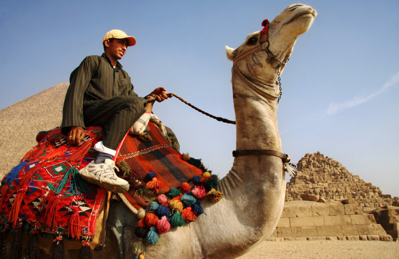 Camel and its driver offering rides to tourists