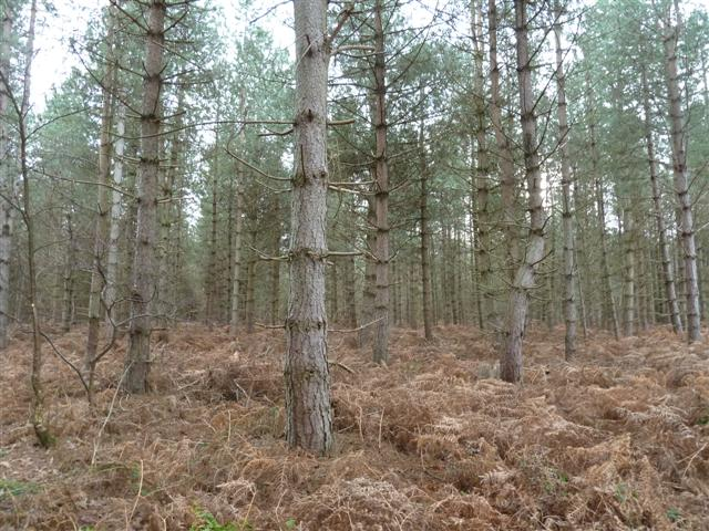 rendlesham-forest02