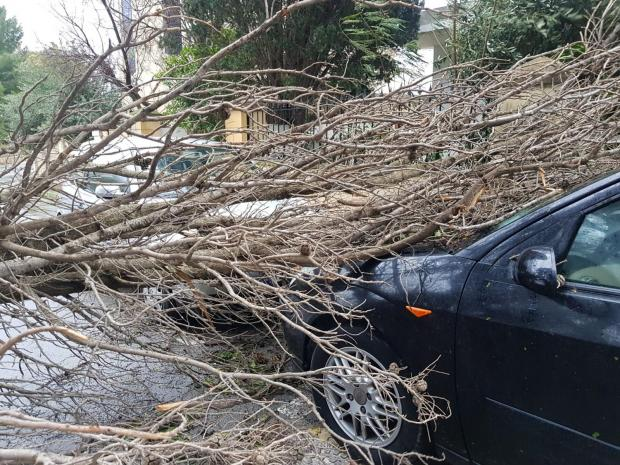 MalDia Felled trees and branches all over the roads