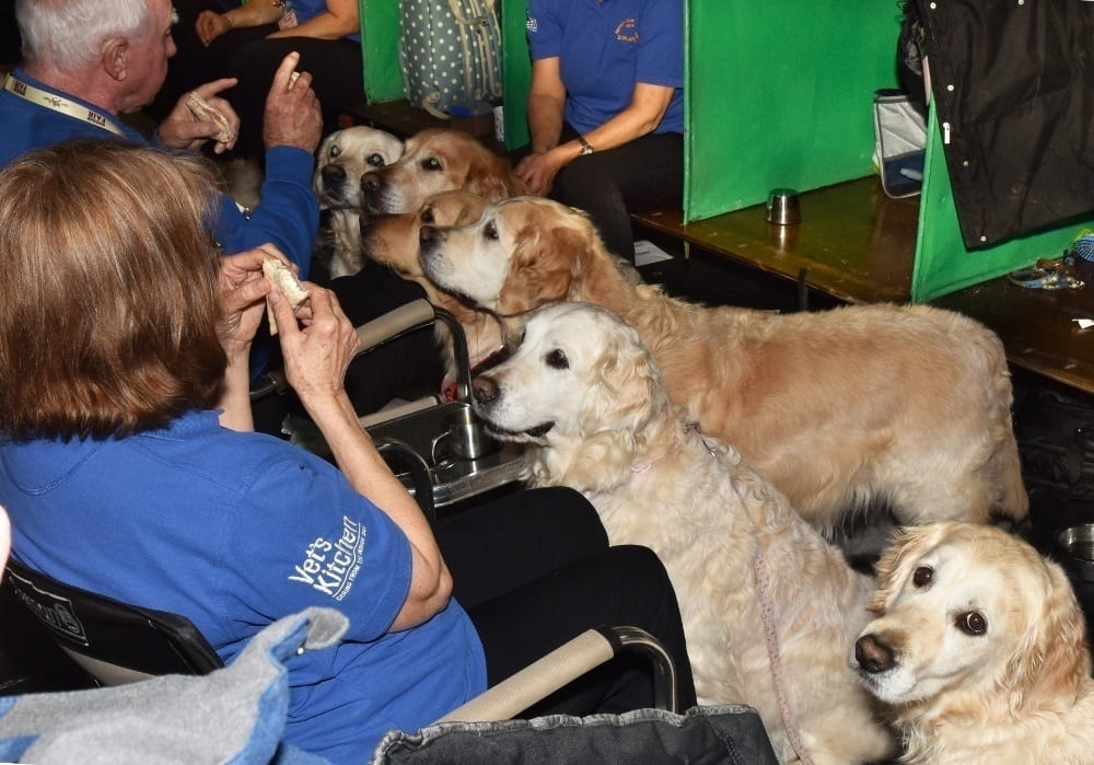 Pic Southern Golden Retriever Display Team