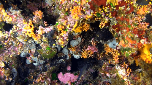 MalDia Colourful coral in the deep hunderds of years old