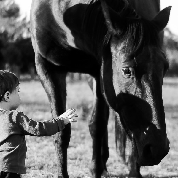 Boy Patting Horse