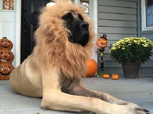 maggie-the-lion_jessica-flevarakis
