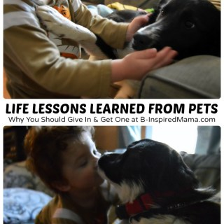 Life Lessons for Kids from Their Pet
