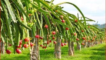 Perkembangbiakan Vegetatif Dan Generatif Secara Alami Dan Buatan