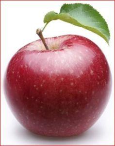 jenis jenis aple