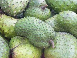 manfaat buah dan daun sirsak untuk kesehatan