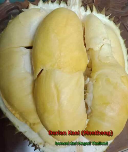 klasifikasi durian