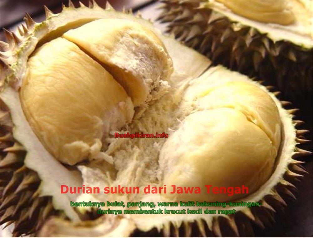 Jenis jenis durian