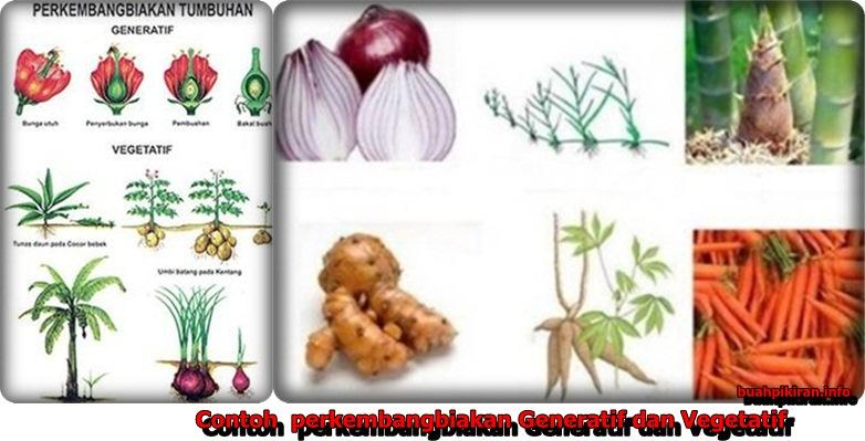 perkembangbiakan tumbuhan secara vegetatif dan generatif
